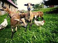 Zvířátka - pronájem chalupy Přídolí - Práčov