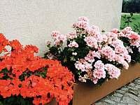 Květiny u domu - pronájem chalupy Strmilov