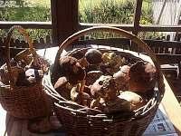 houbařská sezóna - chata k pronajmutí Dobronice u Bechyně