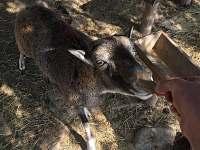 Mufloni - chalupa k pronajmutí Újezdec