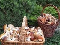 houby - Lutová