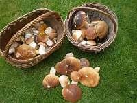 houbařské úlovky - chata k pronájmu Roudná