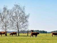 Chalupa k pronájmu - chalupa - 33 Dolní Slověnice