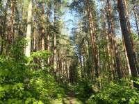 Les za domem láká k procházkám - Kájov - Kladné