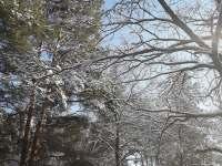 v lese za domem - Kájov - Kladné