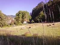 Šumava: Chalupa k pronájmu