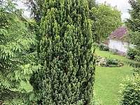 Zahrada / bez vstupního oplocení/ - chalupa k pronájmu Nové Kestřany