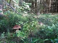 les u Spolí v září -