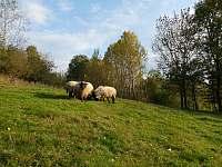 naše ovečky - pronájem chalupy Spolí