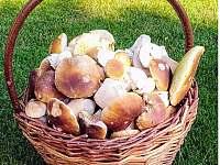 Blízký les nabízí možnost houbaření