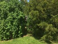 zahrada - Košín u Tábora