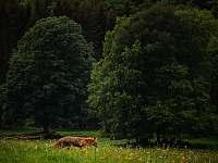 Pastviny nad chalupou - k pronájmu Benešov nad Černou