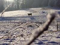 Popelická zima - se svými 900 m.n.m ideální pro běžkaře - pronájem chalupy Daleké Popelice