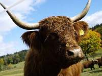 Povstaňte tváří v tvář Highlanderům - Daleké Popelice