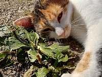 Kočka Malina - Lužnice