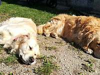 Naši psi Safira a Falco - Lužnice