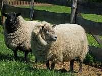 Ovce Kapitánka a Černá huba - Lužnice