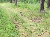 Chata u lesa - chata - 45 Dubné