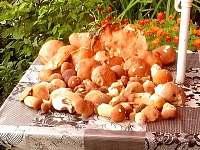 houbařský úlovek z místního lesa - chata k pronájmu Dubné
