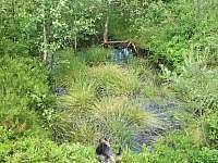 okolní příroda - Dubné