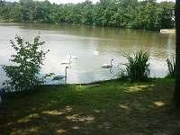 rybník před chatou - k pronájmu Dubné