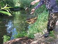 Farma Hamr rybaření