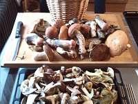houbaření v okolních lesích - pronájem apartmánu Frahelž