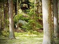 Okolí chalupy - Blato u Nové Bystřice - Česká Kanada