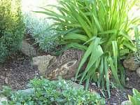 host na zahradě - Maršov