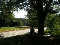 posezení pod stoletým dubem