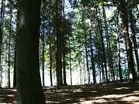 lesy v okolí