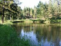 Rybník na pozemku cca 40 m od chaty.