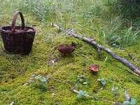 Dobronice u Bechyně - chata k pronajmutí - 21