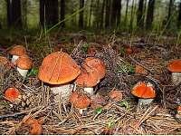 v okolí lesy plné hub