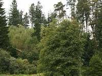 chata v lese a přitom blízko rybníka