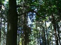 les v bezprostředním okolí chaty