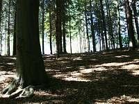 okolí chaty - k pronajmutí Kunžak