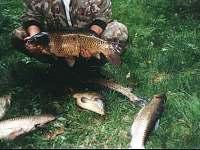 úlovky na rybníku Amerika