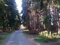Cesta k řece Lužnici