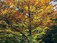 Barevný podzim na Lipně - Frymburk
