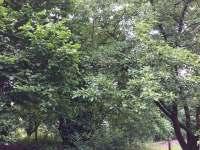 Zahrada - chalupa k pronajmutí Nadějkov