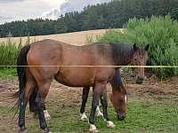 koně - Jižná