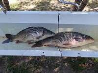 úlovky ryb - Dobronice u Bechyně