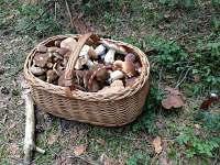 houbaření - Černovice u Tábora