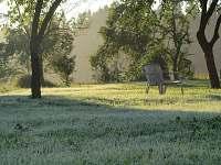 mrazivé ráno na dvoře