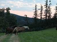 Chalupa k pronájmu - okolí Vlastkovce