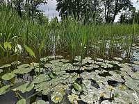 Rybník - chalupa k pronajmutí Plavsko