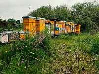 rodinné včelařství - Políkno u Jindřichova Hradce