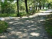 Cyklostezky po hrázích rybníků - Vlkov