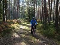Cyklostezky v lesích a okolo rybníků a hlavně bez aut